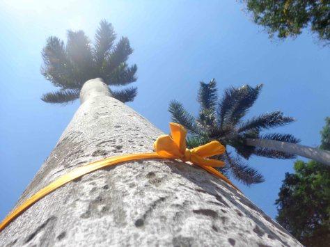 Lazos amarillos en Palmas Reales